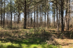Pushacoona Creek Timber Investment - Kemper County MS