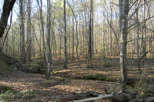 Beaver Creek Hunting & Timber Tract - Fayette County AL