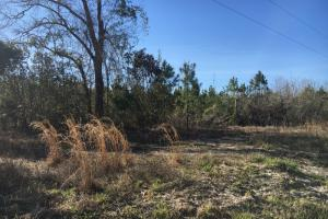 Finklea Hunting Property - Horry County SC
