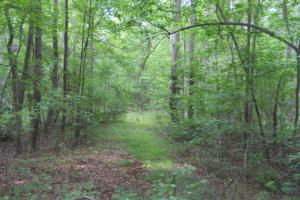 Wooded Residential Acreage