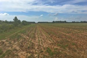 Lee Road Farm and Investment Tract - Baldwin County AL