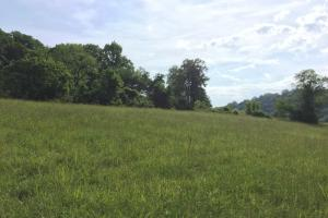<p>2+ acre field on the Clinch River</p>