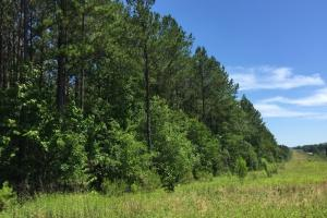 Reasonable Timber / Hunting Tract near Magee - Jefferson Davis County MS