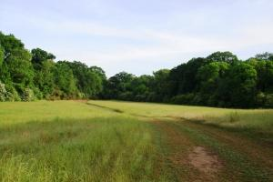Havana Hunting/ Mini-Farm Opportunity - Hale County AL