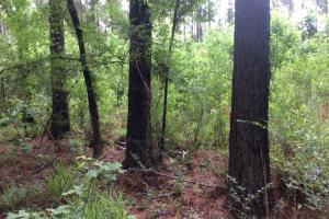 53.7 Acres -  Hunting & Timber Investment  Property - Hinds County MS
