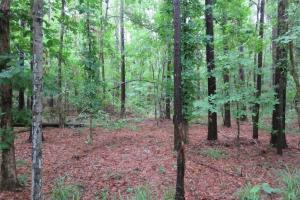 12.16 Acres Midway Rd, Terry MS - Hinds County MS