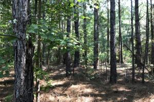Hunting and Timber Investment  - Clarendon County SC