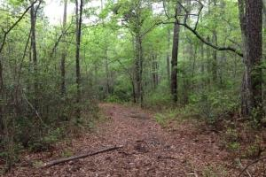 Recreation & Timber Investment Tract - Effingham County GA