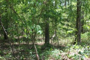 Shop Road Homesite or Weekend Camp - Lamar County AL