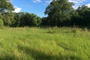Crisler Road +/- 21.4 Acres - Hinds County MS