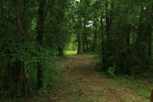 HWY 69 Hunting and Fishing Retreat - Hale County AL