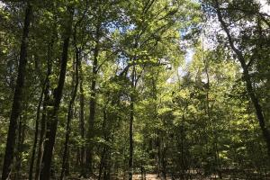 Hwy 178 Homesite  - Anderson County SC