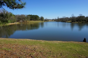 Sawyerville Pasture and Homesite with Lakes - Hale County AL