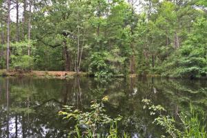 Wilmer Home & Pond Tract - Mobile County AL