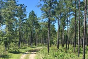 Blakely Timber and Hunting Tract - Early County GA