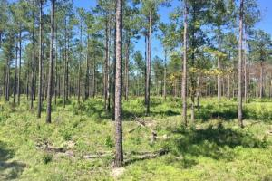 Blakely Timber and Hunting Tract in Early, GA (3 of 5)