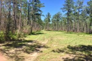 Blakely Timber and Hunting Tract in Early, GA (2 of 5)
