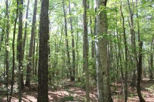 5 Acre Wooded Home Site - Berkeley County SC