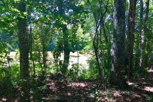 Chattahoochee River Hunting and Timber in Early, GA (4 of 6)