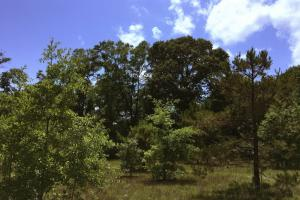 <p>Large Harwoods and Young hardwoods offer diversity in Habitat and promotesa higher carrying capacity for whitetales on this property</p>