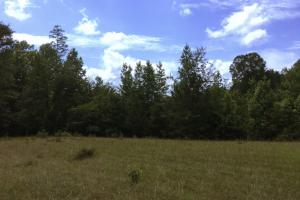 <p>Another Food Plot</p>