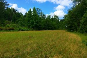 <p>Food Plot with Tower shooting house</p>