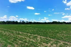 Millers Pond Farm Tract - Aiken County SC