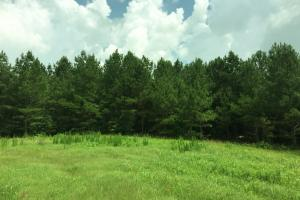 McKinney Branch Homesite, Pasture, and Hunting