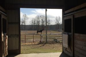 <p>Beautiful Stable opens to Dressage</p>