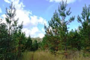 Photo 3 of 7  ·  al land for sale, hunting land for sale, recreational land for sale