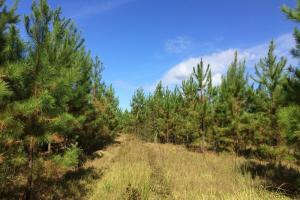 Photo 2 of 7  ·  al land for sale, hunting land for sale, recreational land for sale
