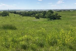 Land for sale in Sarpy County Nebraksa. View of the North border.  (3 of 5)