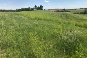 Land For Sale in Sarpy County Nebraska. Overview of the subject property.  (4 of 6)