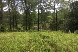 Pettus Rd. Timber, Hunting, and Recreational Tract - Montgomery County AL