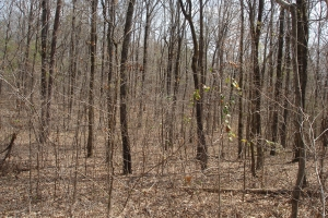 Bama Rock Garden Rd. Homesite, Timber, and Hunting Tract - Tuscaloosa County AL