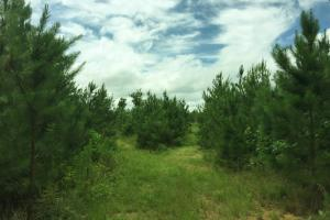 Johnson Branch Hunting and Timber Investment - Franklin County AL