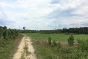 Lee County Hunting Estate - Lee County SC