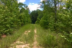 Talbot Hunting and Timber Property in Talbot, GA (4 of 8)