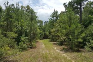 30 Acre Recreational Tract Willis TX