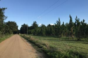 Private level road leading to property. #GeorgiaLandForSale (13 of 31)
