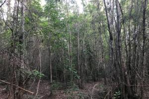 Natural timber leading to Mill Creek. #GeorgiaLandForSale (28 of 31)
