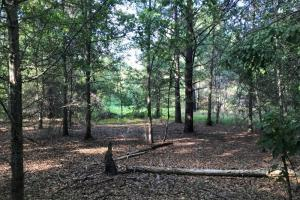 Clean woods floor and food plot area. #GeorgiaLandForSale (2 of 31)