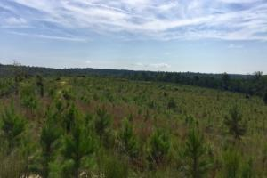 Buena Vista Hunting and Timber in Marion, GA (16 of 18)
