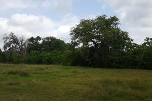 60 acre Recreational/Commercial Acreage in Waller, TX (14 of 15)