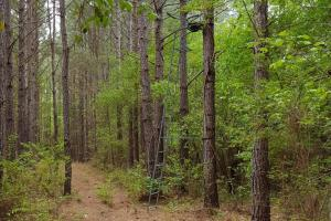 Timber Investment with Excellent Hunting - Anderson County SC