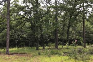 Beautiful natural trees. #GeorgiaLandForSale (8 of 31)
