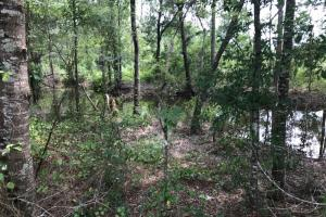 Flowing large creek along property border. #GeorgiaLandForSale (1 of 31)