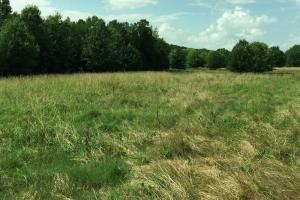 CR-74 Pasture and Hunting Land - Franklin County AL
