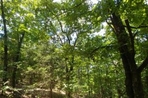 Residential, Deer and Turkey Hunting Property Close to Greenwood