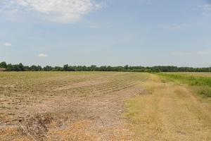 Cropland with Pond - Marion County SC
